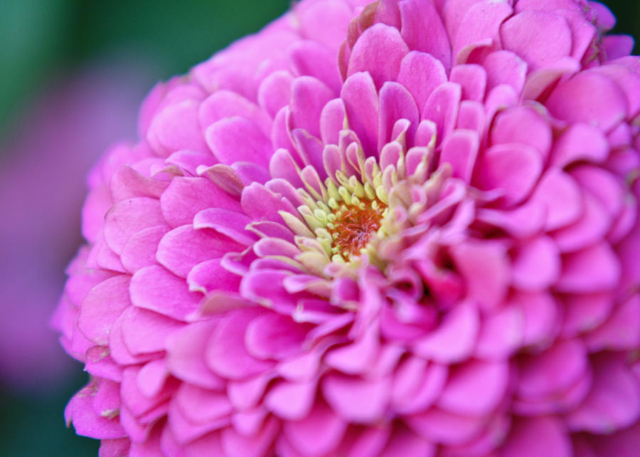 Flower Photograph - Flower Macro by Edward Myers