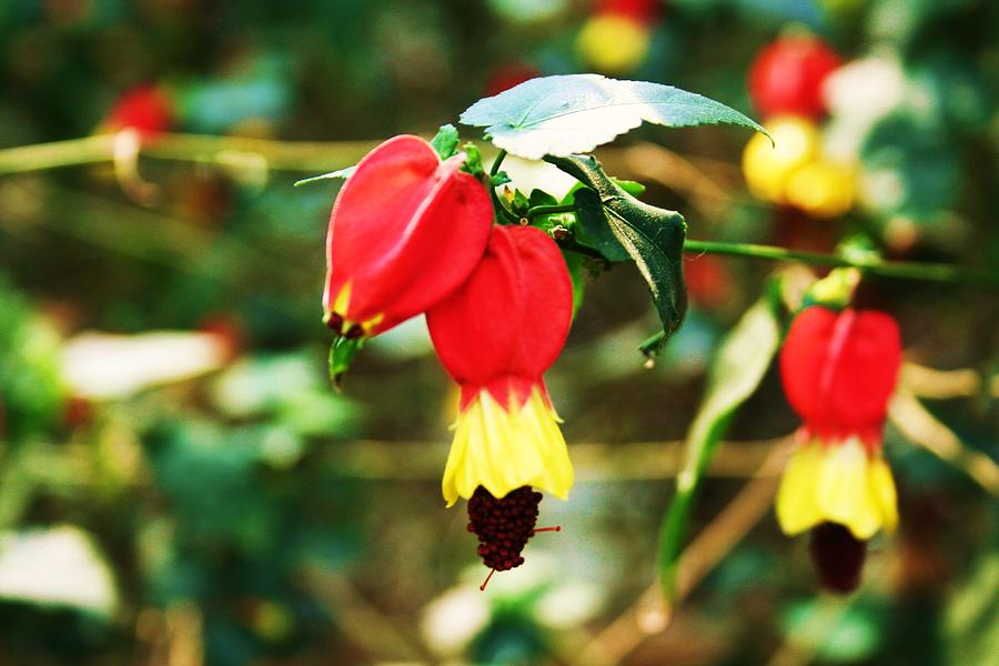 Flowering Plant Photograph - Flowering Plant by Michael C Crane