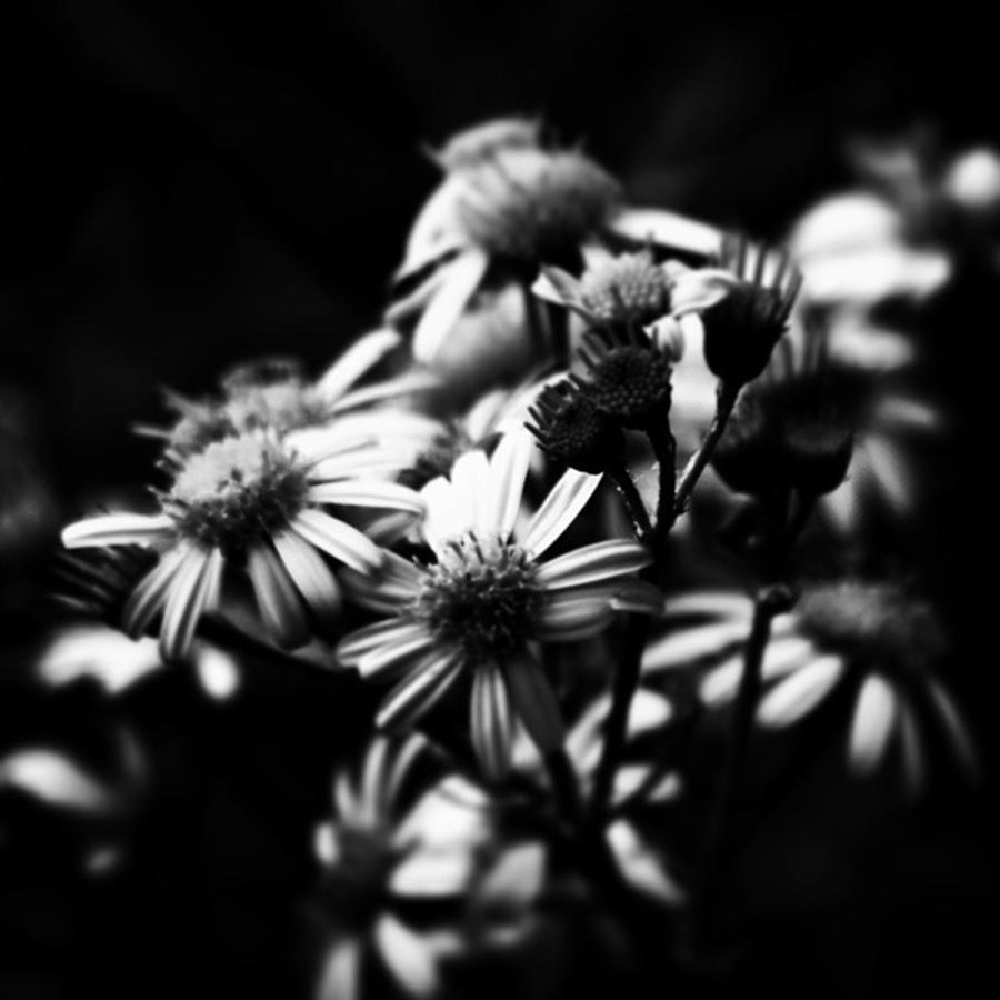 Beautiful Photograph - #flowers #flower #tagsforlikes #petal by J Roustie