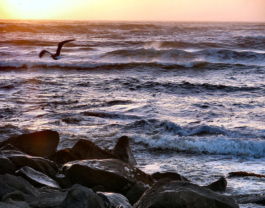 Coastal Photograph - Fly By by Dana Patterson