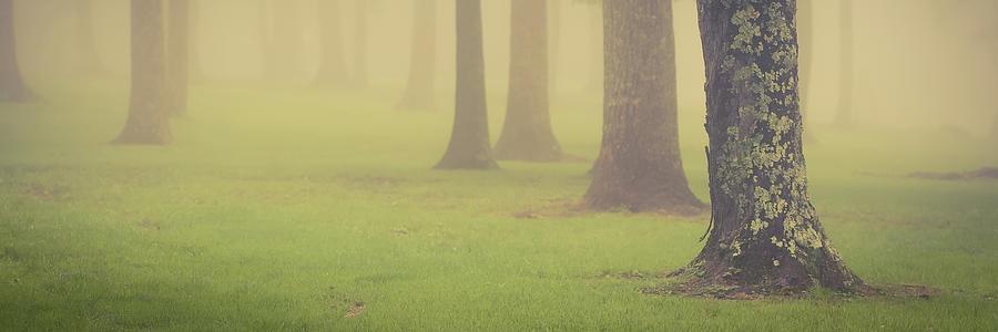 Foggy Trees Pano by Joye Ardyn Durham