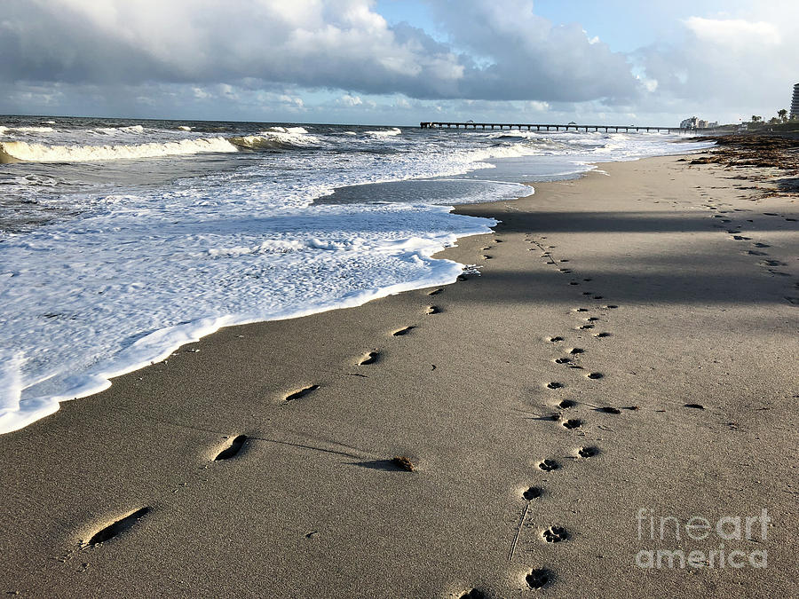 8f4b0f70a Footprints And Paw Prints On The Sand Photograph by Jaimie Tuchman