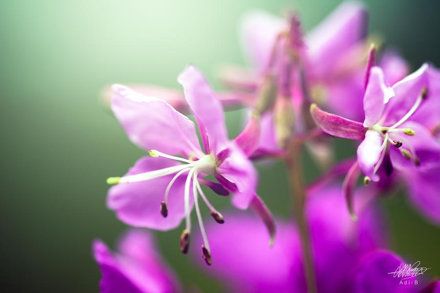 Nature Photograph - Forest Flower by Adnan Bhatti