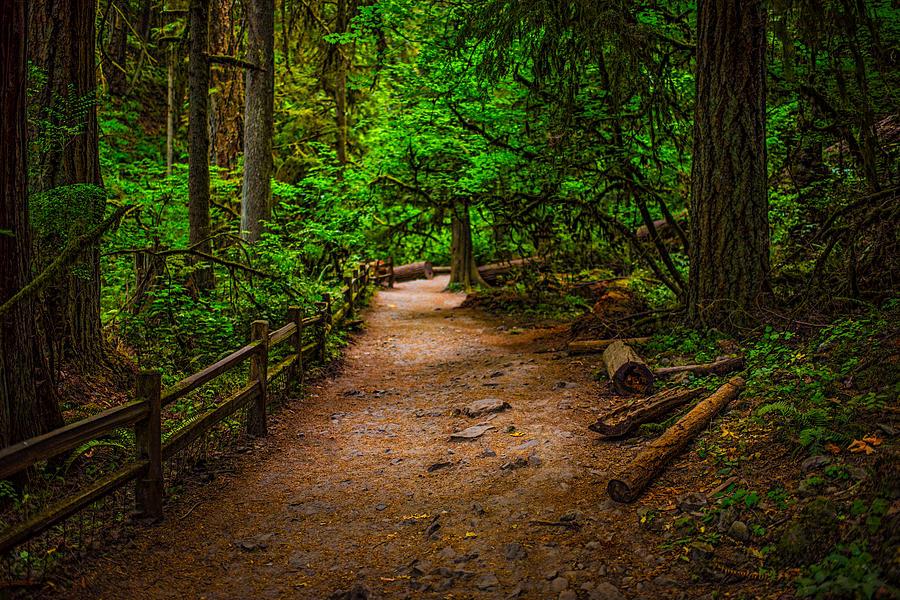 Image result for images of forest park portland oregon