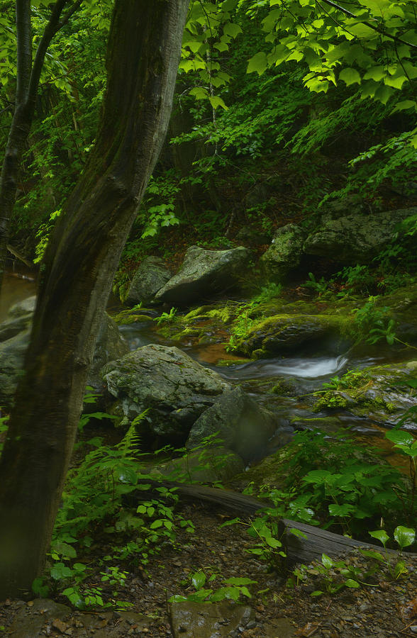 Forest Photograph - Forest Stream by Stephen  Vecchiotti