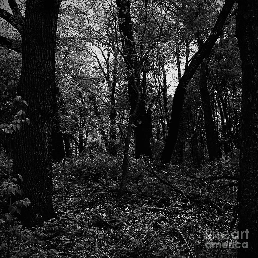 Forest Through The Trees Photograph