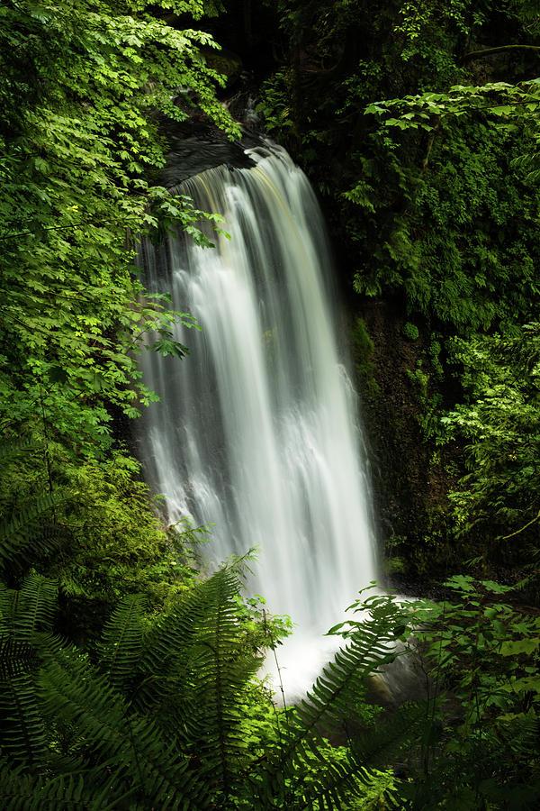 Forest Waterfall by Chris McKenna