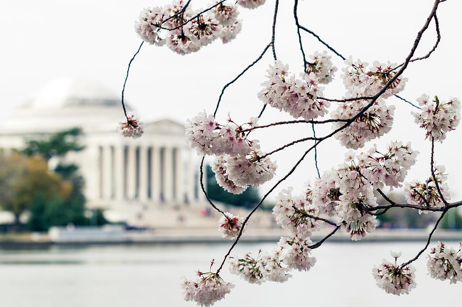 Sakura Photograph - Framed by Edward Kreis