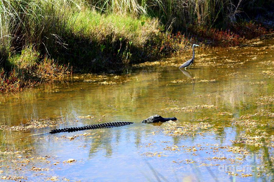 Florida Wildlife Photograph - Friends? by Patti Whitten