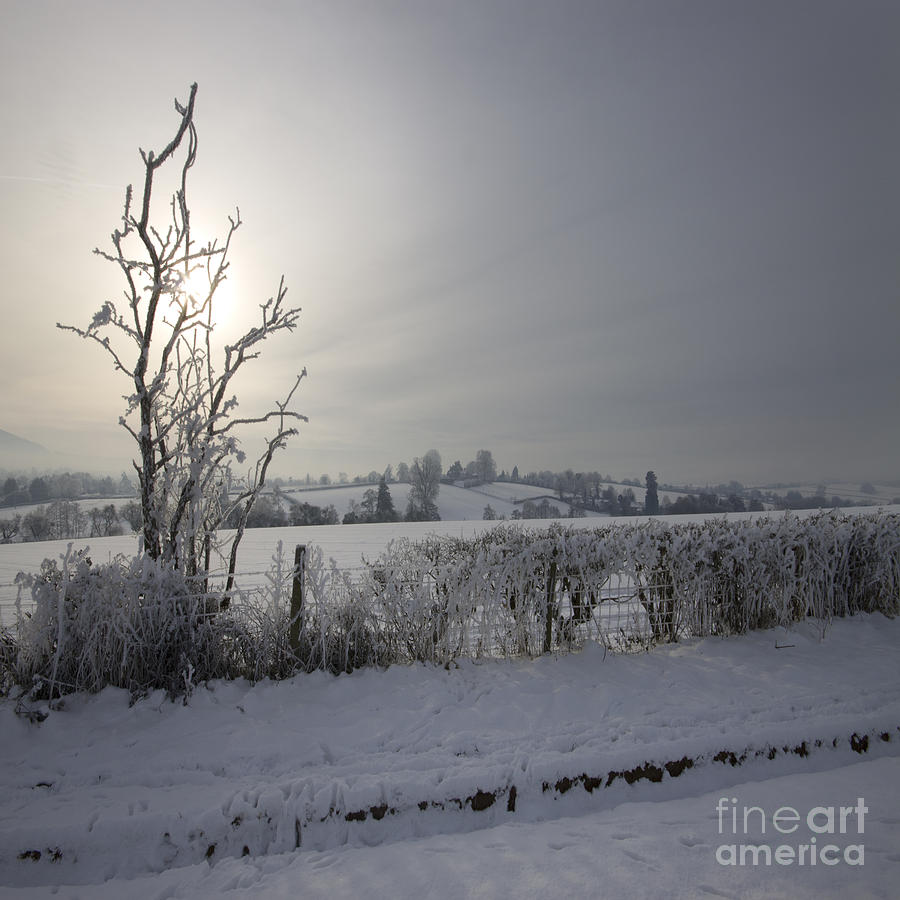 Winter Photograph - Frozen Britain by Angel Ciesniarska