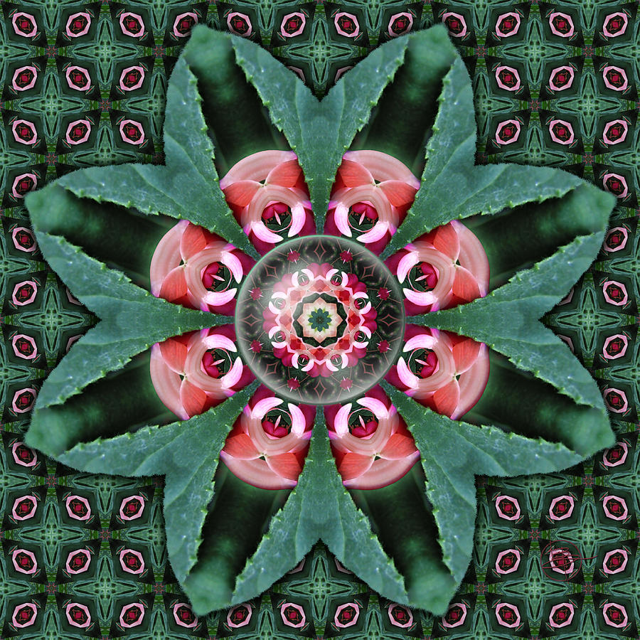 Love Photograph - Fuchsia Enfolding by Karen Hochman Brown