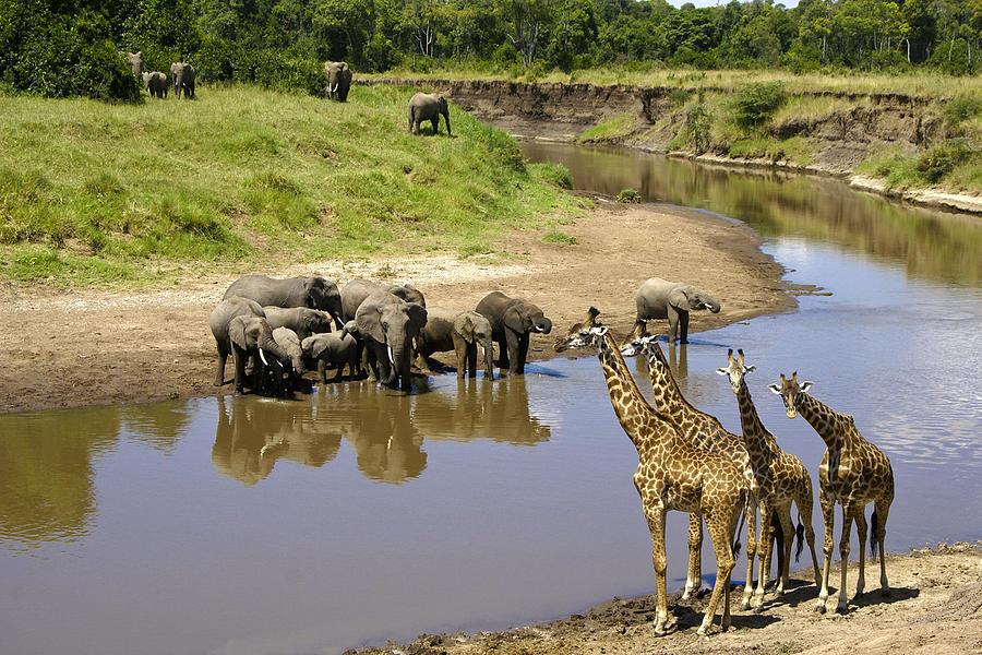 Africa Photograph - Garden Of Eden by Michele Burgess
