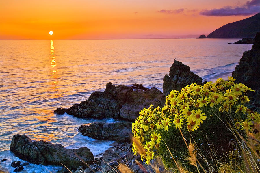 Beaches Photograph - Giant Coreopsis Sunset by Greg Clure
