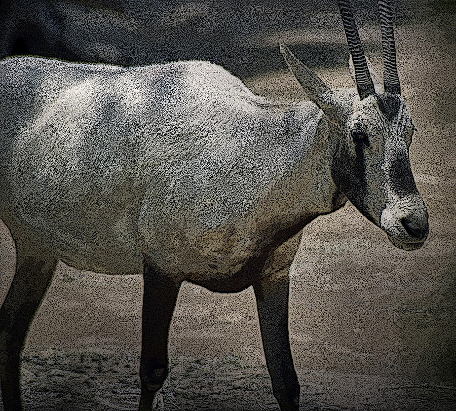 Goat by Maria Reverberi