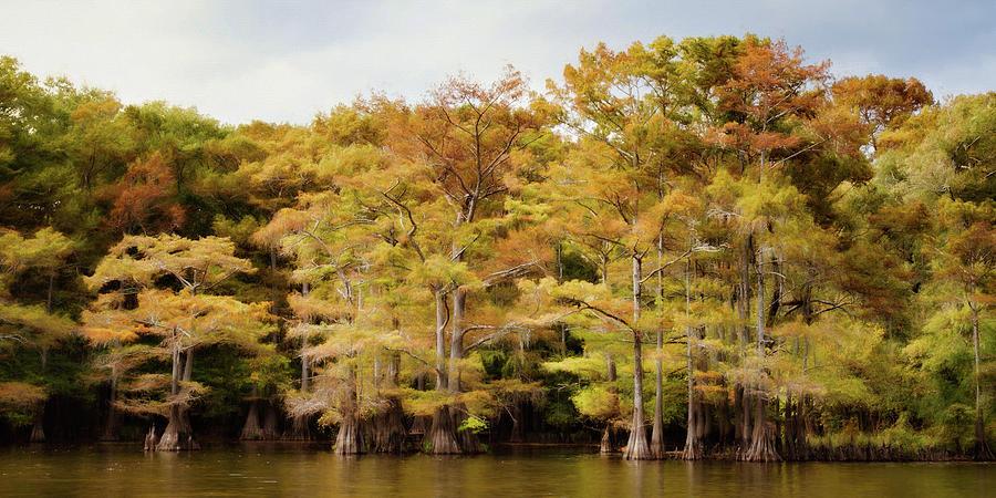 Autumn Photograph - Golden Bayou by Lana Trussell