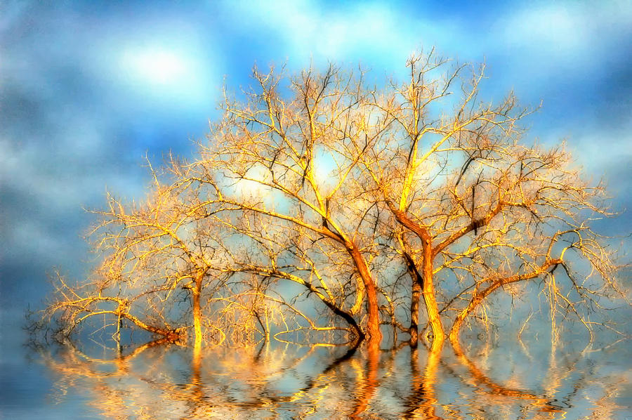 Trees Photograph - Golden Dawn by Ross Powell