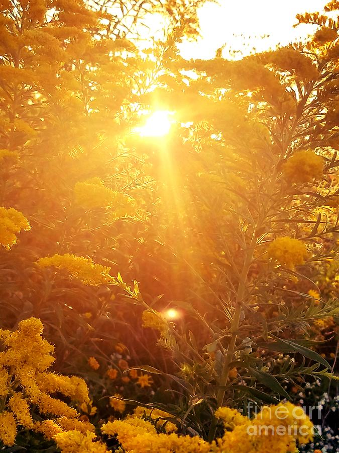 Autumn Photograph - Golden Days Of Autumn by Maria Urso