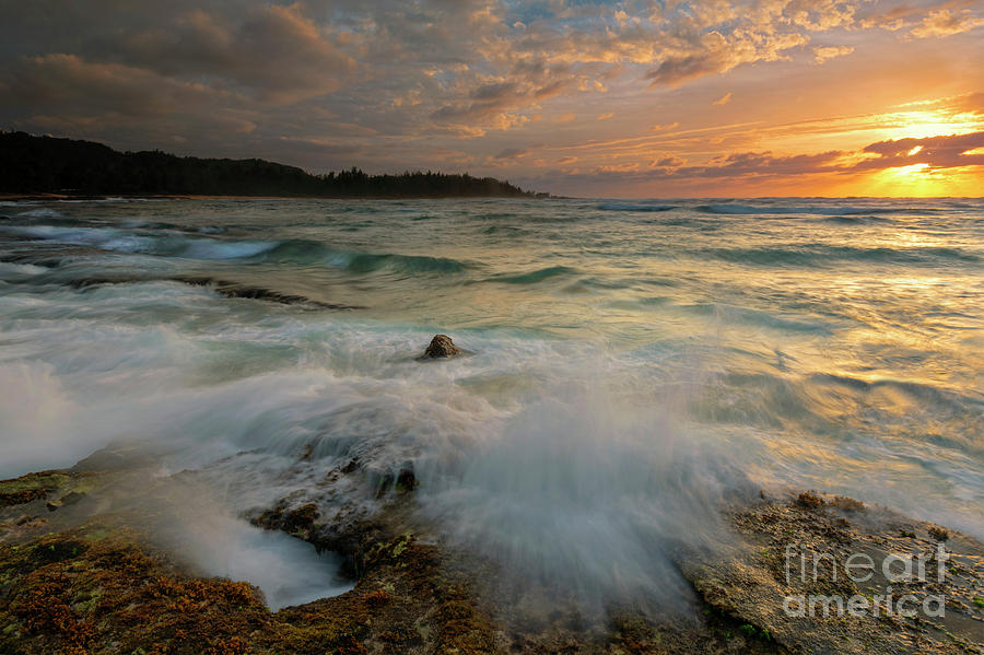 Turtle Bay Photograph - Golden Light by Mike Dawson