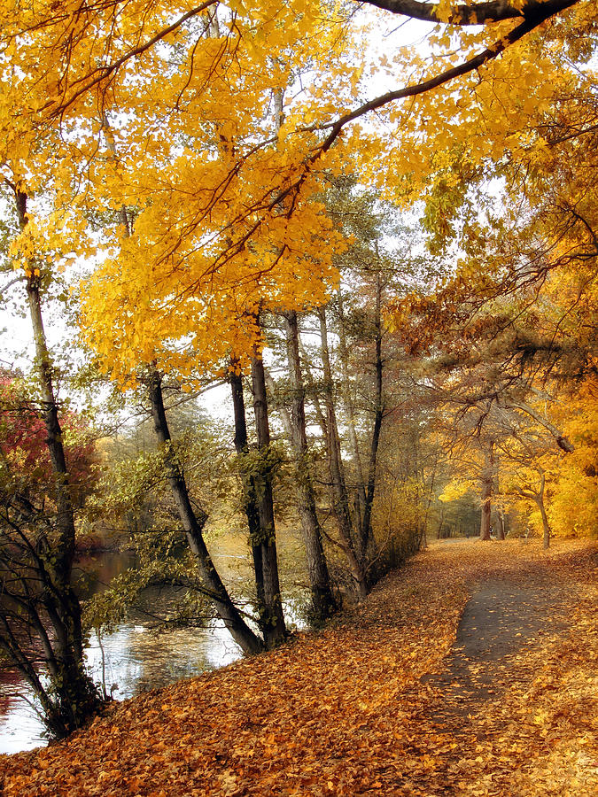 Autumn Photograph - Golden Path by Jessica Jenney