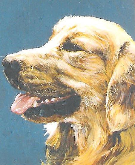 Dog Painting - Golden Retriever-sandy by Steve Greco