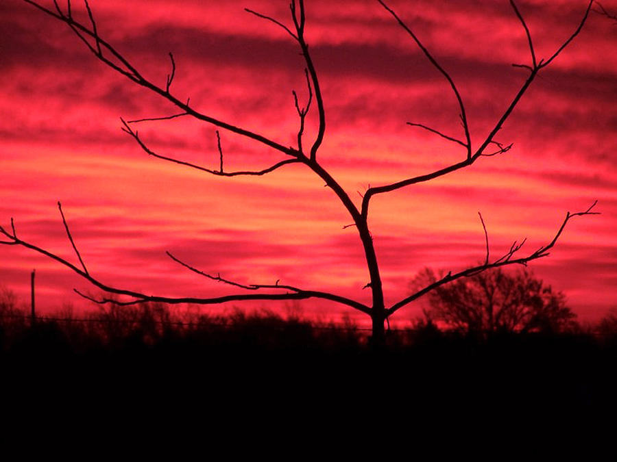 Sunset Photograph - Good Evening by Evelyn Patrick