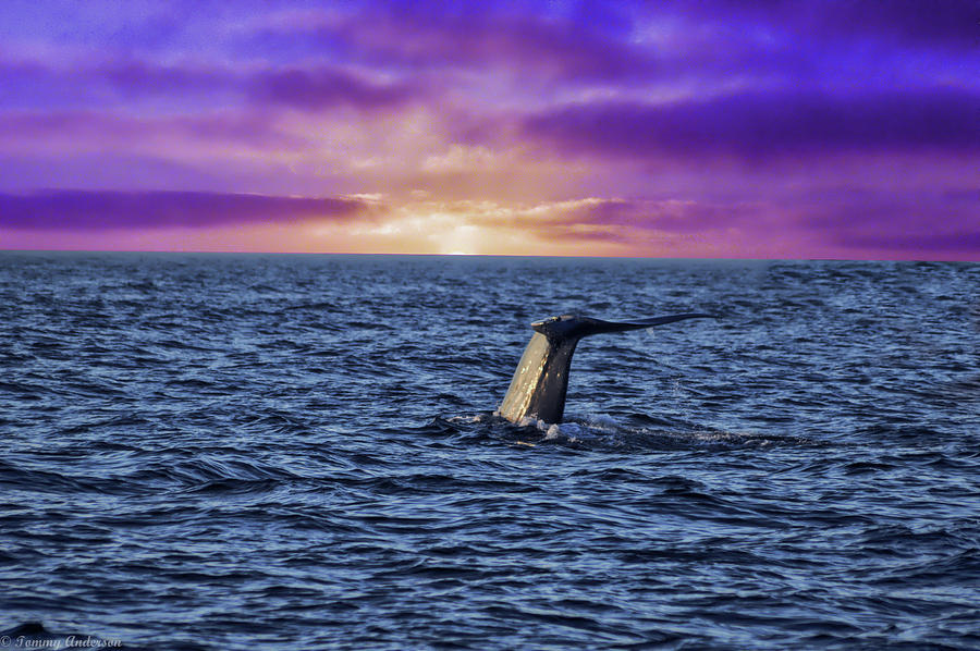 Blue Whale Photograph - Good Night Newport Beach by Tommy Anderson