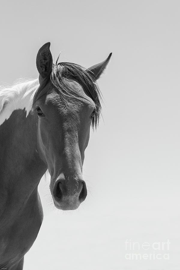 Nikon Photograph - Grace by Nicole Markmann Nelson