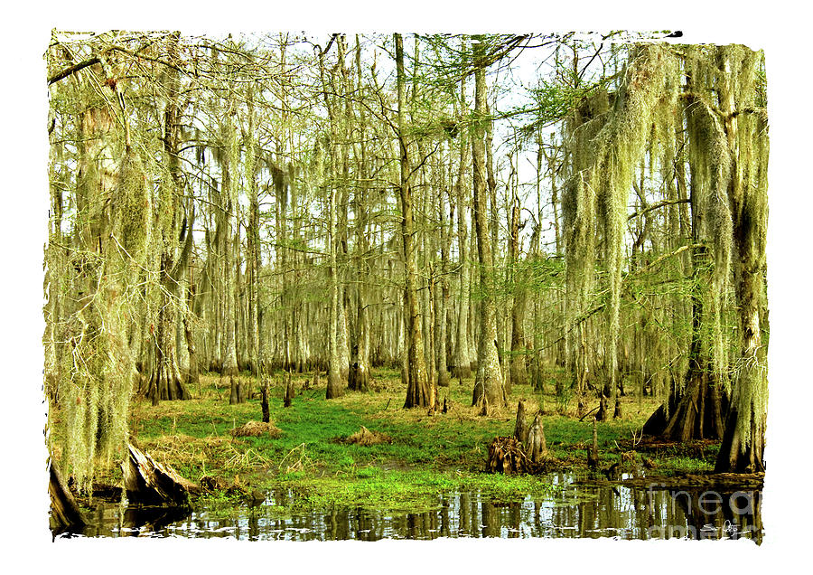 Swamp Photograph - Grand Bayou Swamp  by Scott Pellegrin