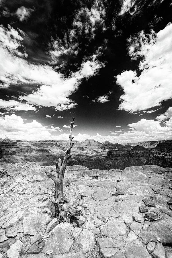 Grand Canyon Photograph - Grand Canyon Landscape by Alex Conu