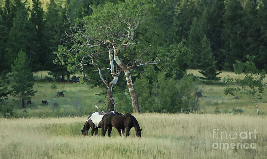 Horses Photograph - Grazing Pair by Roland Stanke