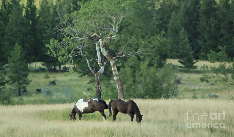 Horses Photograph - Grazing by Roland Stanke