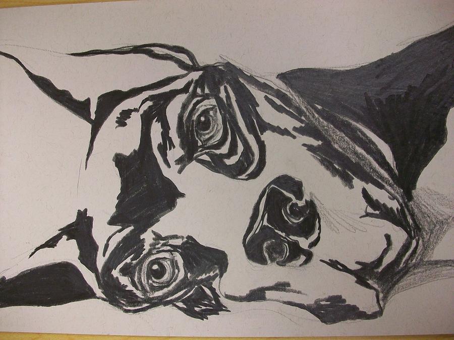 Great Dane Drawing by Kate Padberg