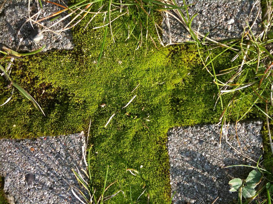 Green Photograph - Green Cross by Sara Efazat