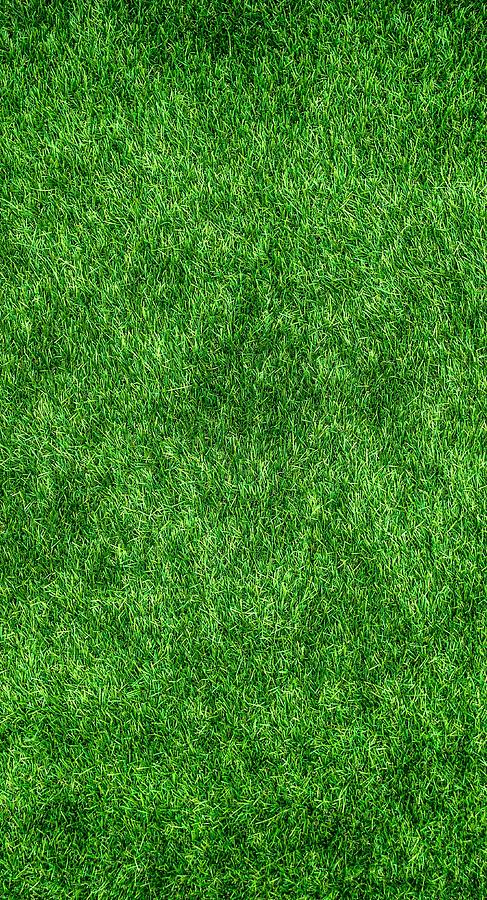 Grass Photograph - Green Grass by Tilen Hrovatic