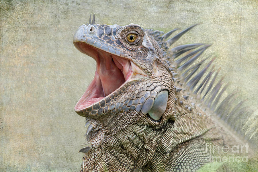 Green Iguana by Heiko Koehrer-Wagner