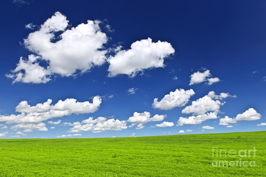 Field Photograph - Green fields under blue sky by Elena Elisseeva