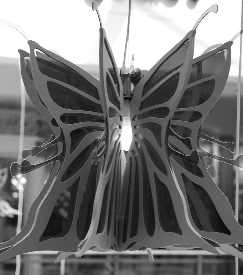 Black And White Photograph - Hanging Butterfly by Rob Hans