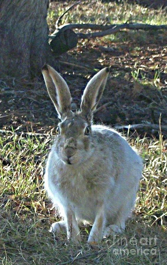Hare Photograph - Hare by REA Gallery