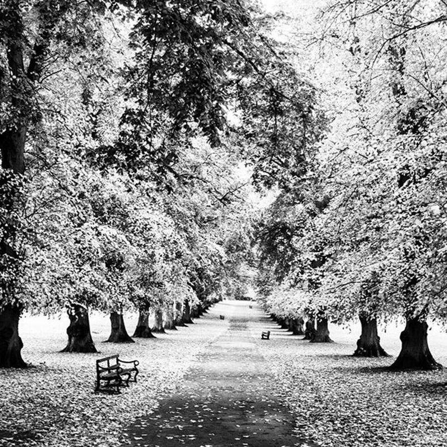 England Photograph - Harpenden, England by Aleck Cartwright