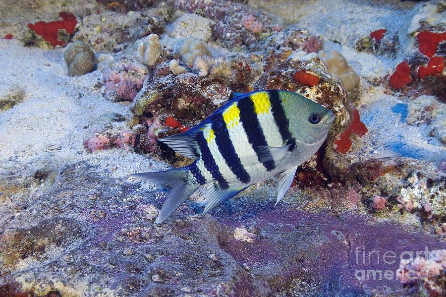 Birth Photograph - Hawaii, Marine Life by Dave Fleetham - Printscapes