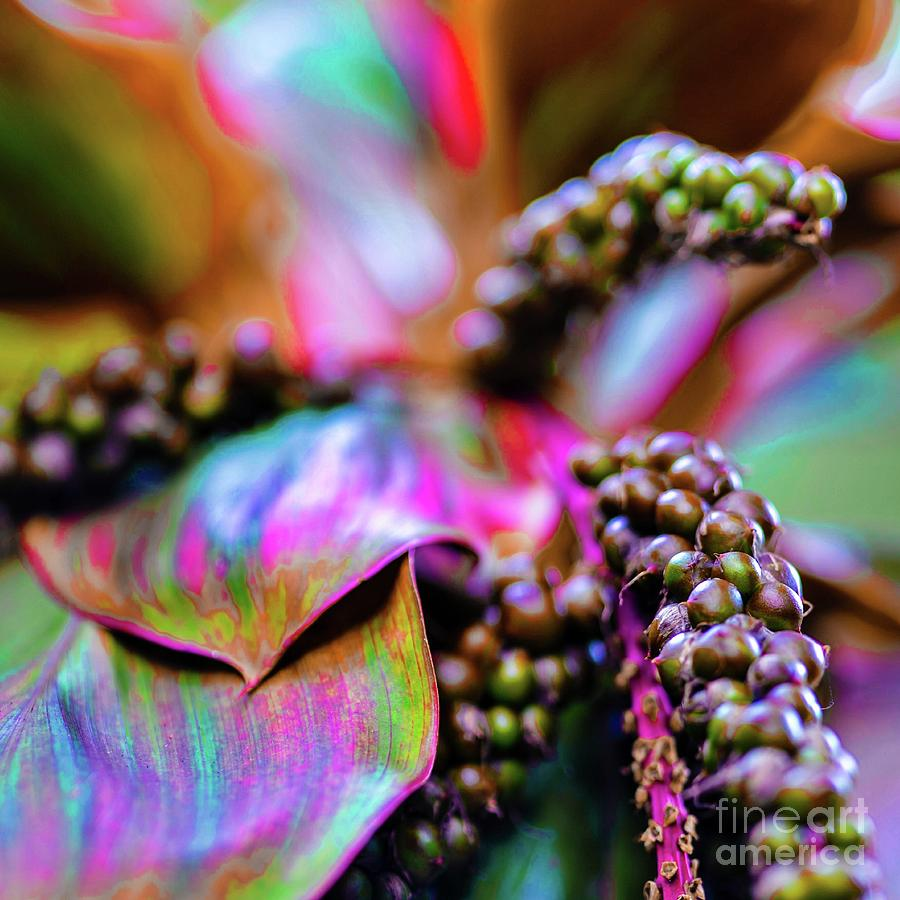 Tropical Photograph - Hawaii Plants And Flowers by D Davila
