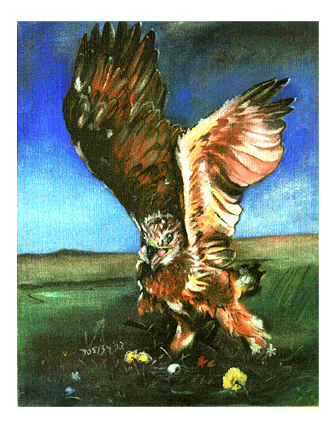 Portraits Painting - Hawk In The Field by Bobby Barredo
