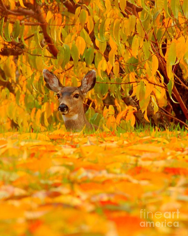 Deer Photograph - Hello by Scott Gould