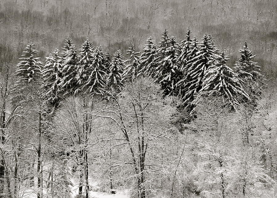 Hemlocks Over Whaley Lake  Photograph by Jeremy Wolff