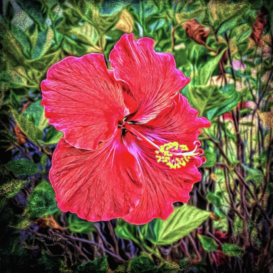 Hibiscus flower photograph by lewis mann hibiscus photograph hibiscus flower by lewis mann izmirmasajfo