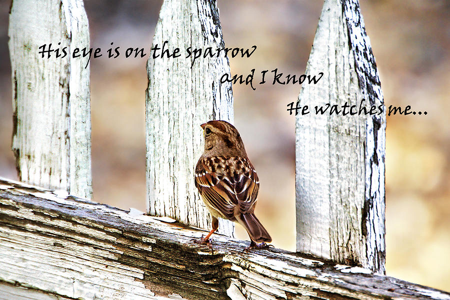 All Music Chords his eye is on the sparrow music sheet : His Eye Is On The Sparrow With Quote Photograph by Abram House