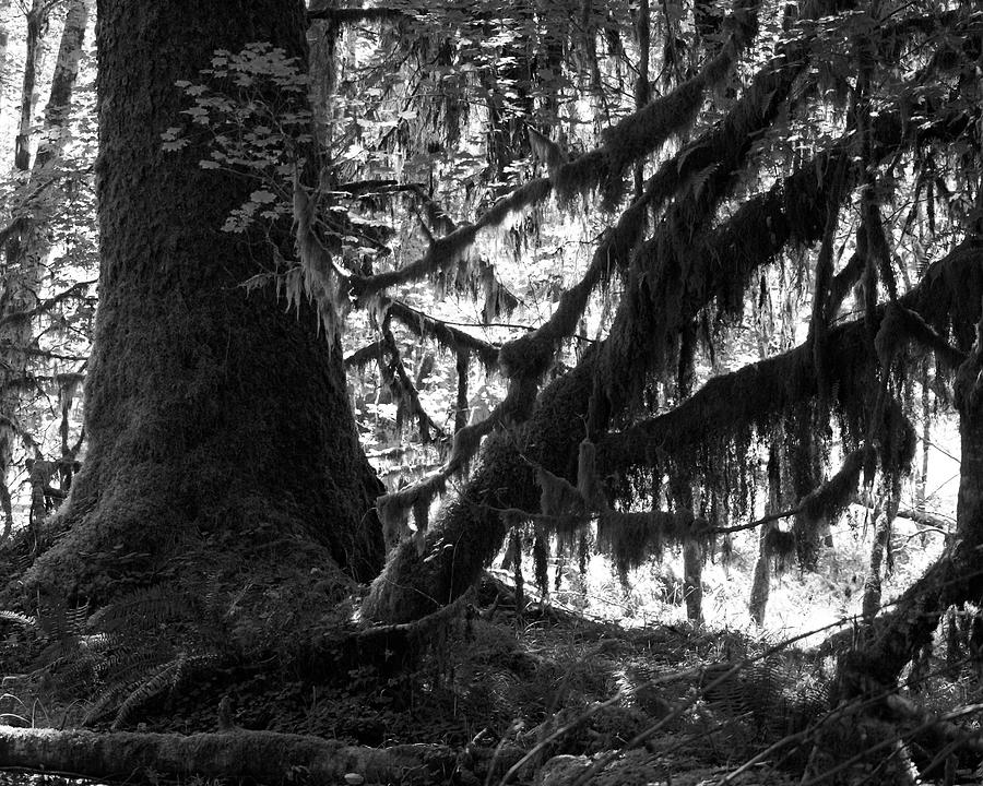 Nature Photograph - Hoh Rain Forest by Sonja Anderson