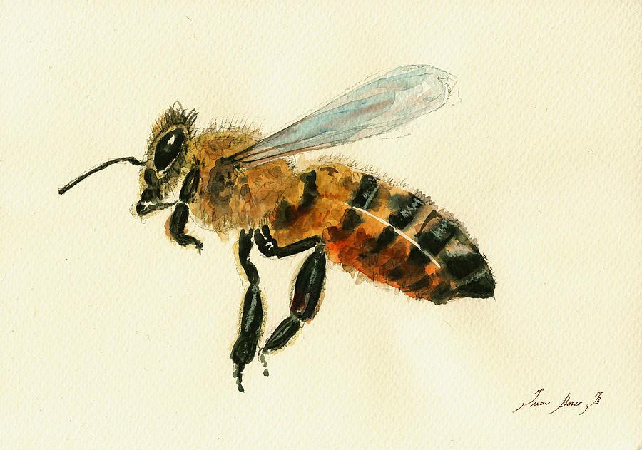 Honey Bee Watercolor Painting - Honey bee watercolor painting by Juan  Bosco