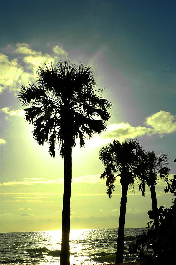 Sunset Photograph - Honeymoon Island Sunset by Susanne Van Hulst