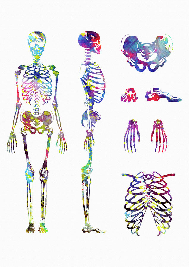 Human Body Skeletal System Digital Art By Erzebet S